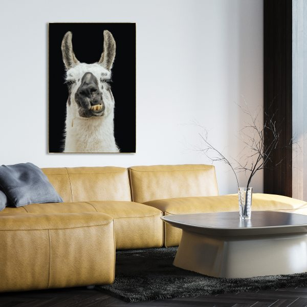Hillbilly Lama by Adam Mowery